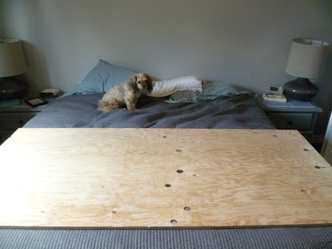 """Start with sheet 3/4"""" Select Grade (Smooth of plywood, cut down to size... For a King Bed I Cut it down to 36""""hx80""""l (It's also a great idea to have a helper, hi Scooby!)"""
