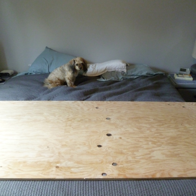 "Start with sheet 3/4"" Select Grade (Smooth of plywood, cut down to size... For a King Bed I Cut it down to 36""hx80""l (It's also a great idea to have a helper, hi Scooby!)"