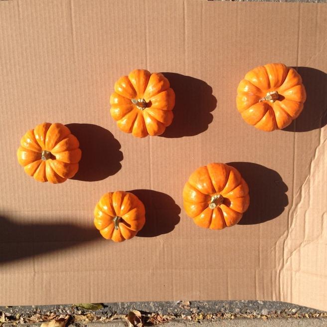 Pumpkins before